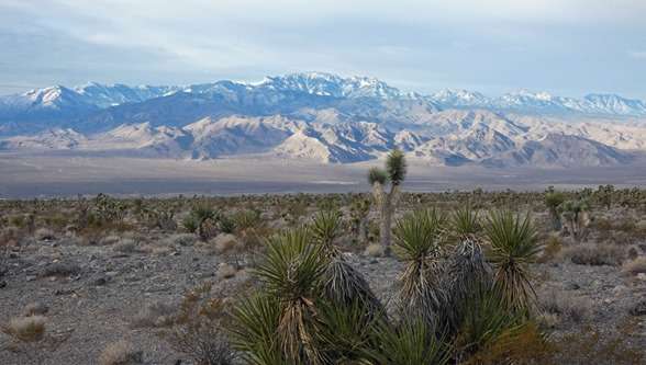 Yucca Forest and Spring Mountains