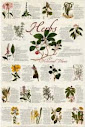 Interpretationes Of Ancient Herbs