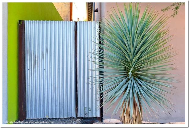 151229_Tucson_0029