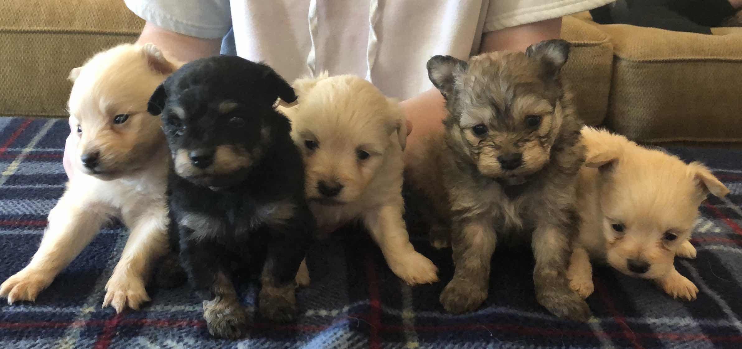 Daisys Dainty Dogs 2019-2861
