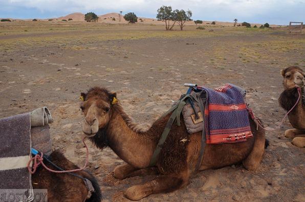 sahara desert-26