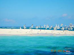 pulau-bawean-14