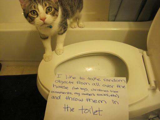 kitty-shame-001-656x492-2015-12-7-20-55.jpg
