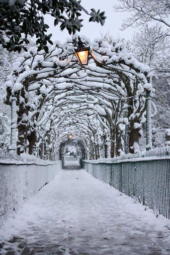 Paisagem de neve branca