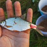 20140719_Fishing_Lysyn_027.jpg