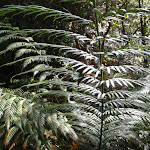 Fern above stream (145587)