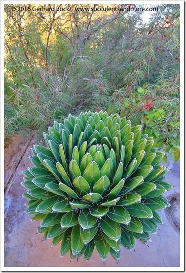 151230_Tucson_Tohono-Chul-Park_0041
