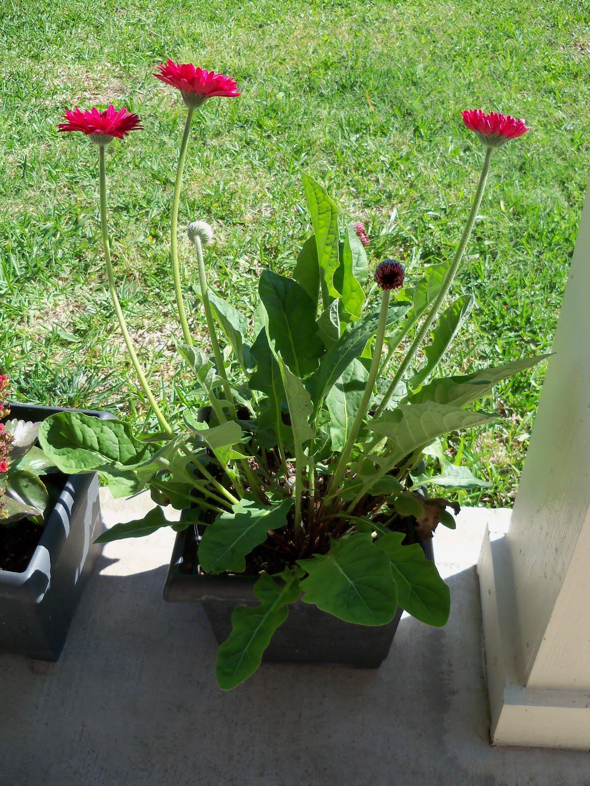 Gardening 2010 - 101_1331.JPG