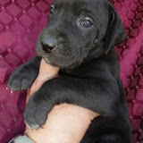 Cassie's black girl @ 4 weeks