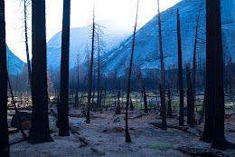 Burned out forest in Little Yosemite Valley