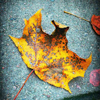 20120925-01-leaf.jpg
