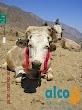 Asistencia Huancavelica por terremoto 2007 (2)