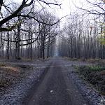 Bois de Vossery : allée centrale et carrefour