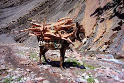 l'âne affecté au transport du bois
