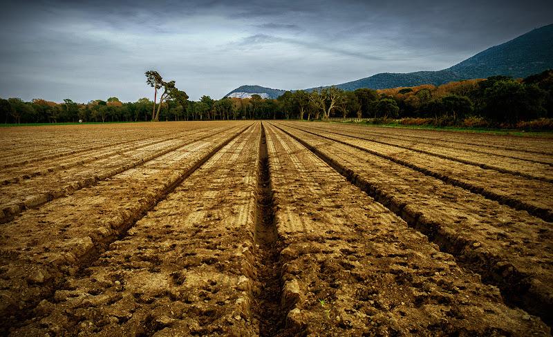 Prospettiva Agricola di Razor1979