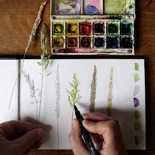 Sketchbook Grasses by Alice Draws The Line