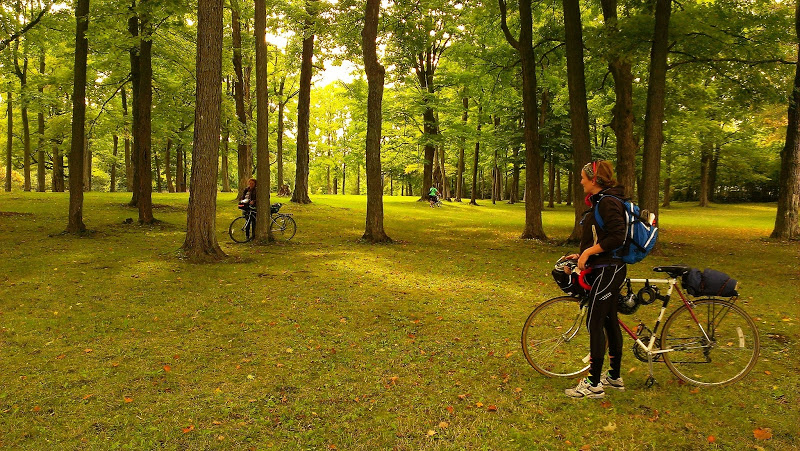 Bikes among the green trees