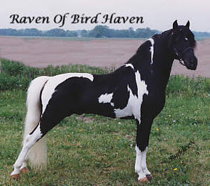 Raven of Bird Haven
