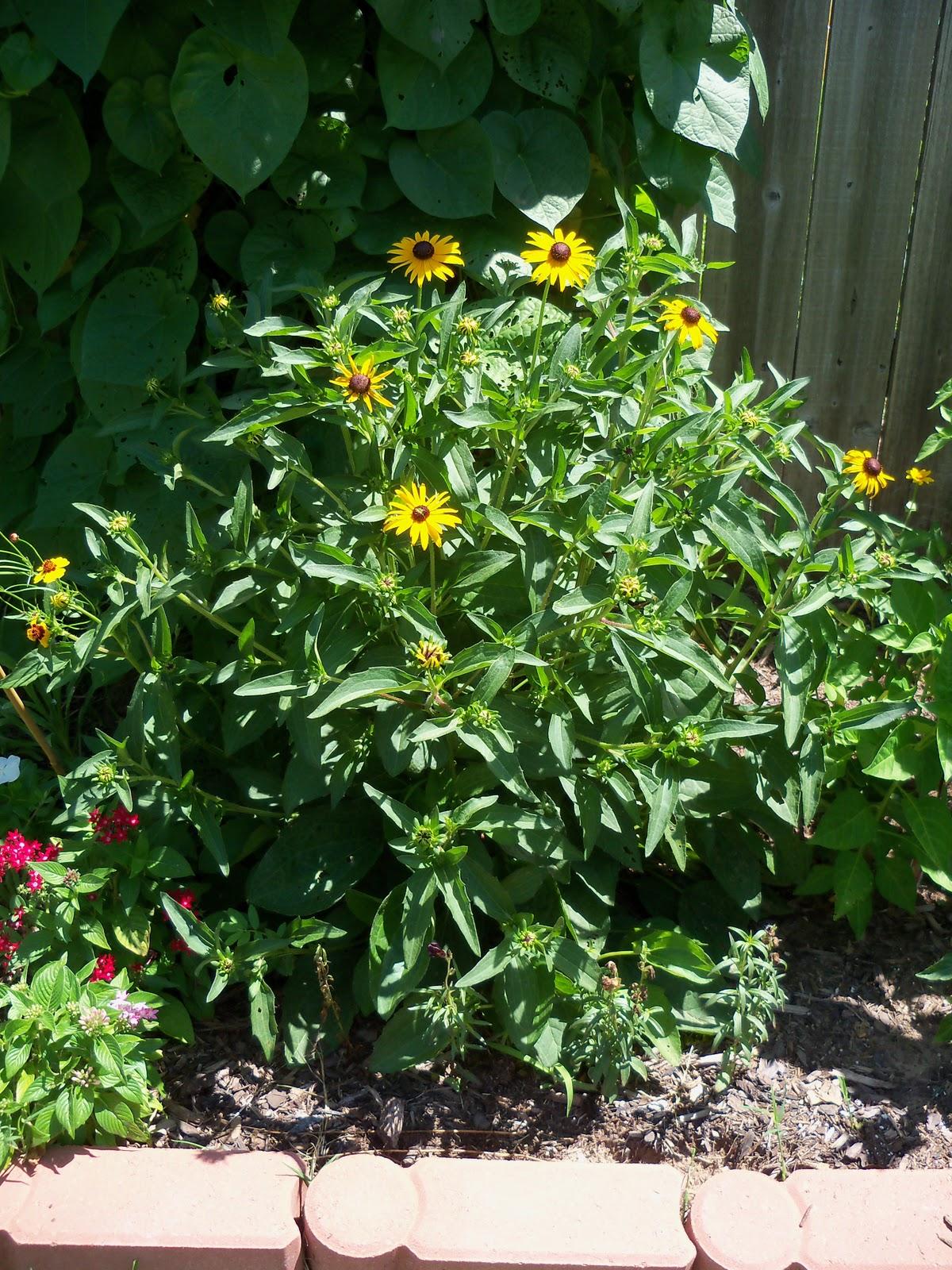 Gardening 2010, Part Three - 101_4409.JPG