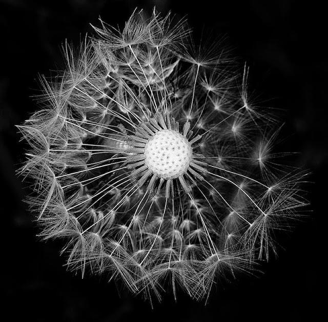 Daha İyi Çiçek Fotoğrafçılığı İçin 5 İpucu