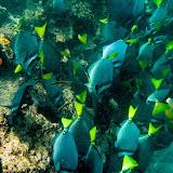 galapagos - Galapagos_FB-126.jpg
