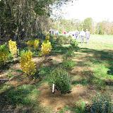 Guilford Salt Meadows Sanctuary Planting - IMG_7844.JPG