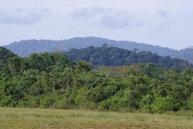 Saül (collines à l'ouest de la piste d'aterrissage), 14 novembre 2012. Photo : J.-M. Gayman