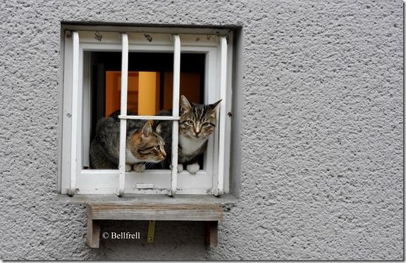 Katzen am Fenster 1