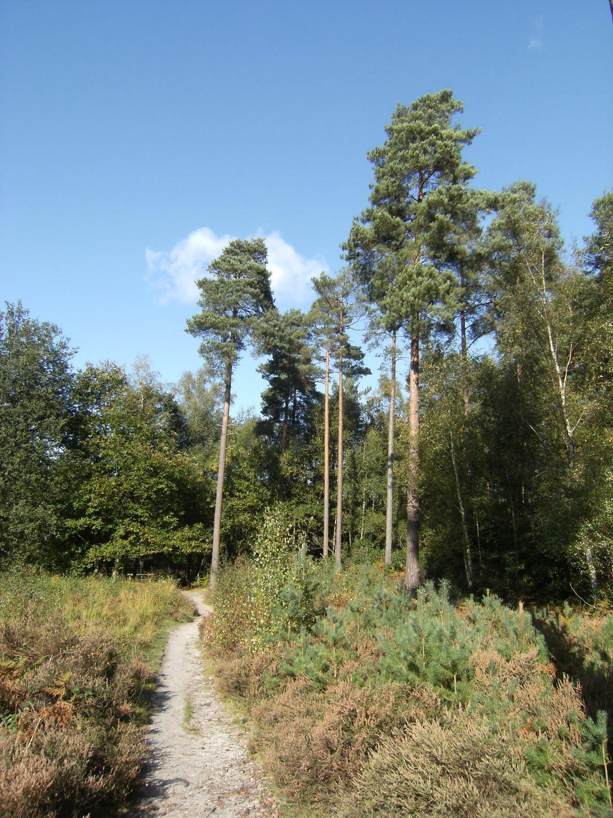 DSCF0107 Path near Heath Pond
