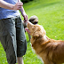 Embrace An Pet - Mind Down To The Pet Protection