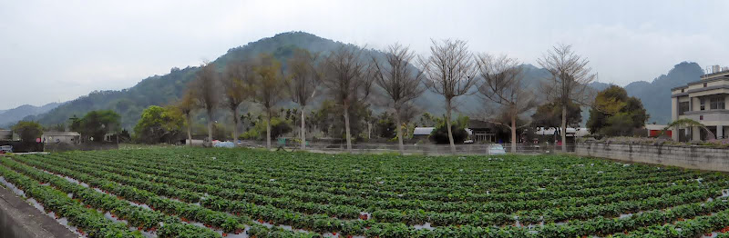 Miaoli county. Nanzhang puis Dahu la capitale de la fraise... - P1050272.JPG