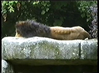 2001.08.26-019 lion