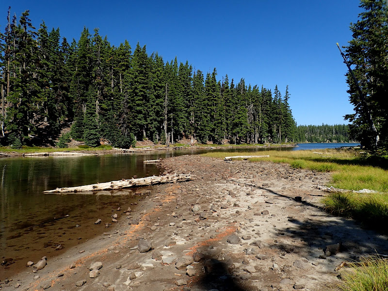 King Spruce Sky Lakes Wilderness Oregon