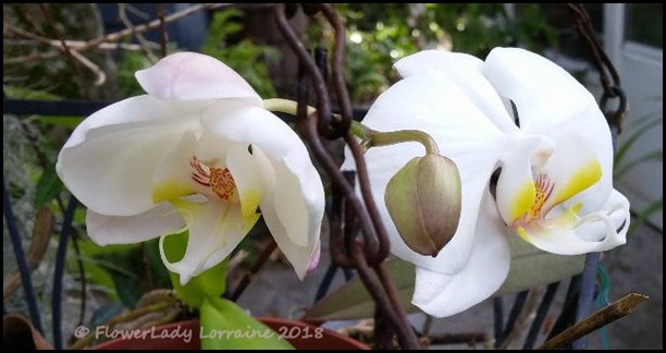 03-06-nj-orchids