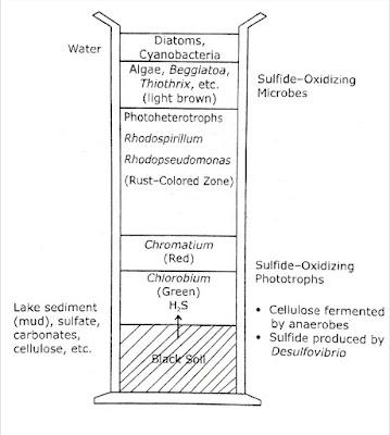 The Winogradsky Column