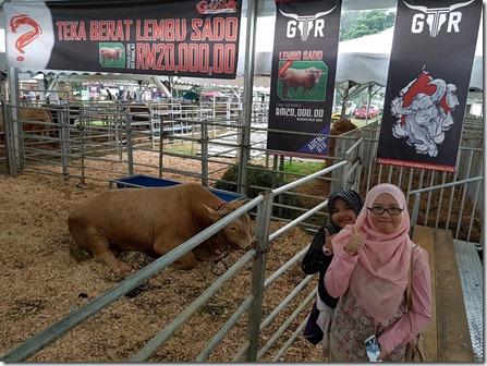 jualan-lembu-ternakan-maha-2016
