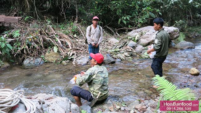 Khai thác Mật Ong Rừng ở Lai Châu - 7
