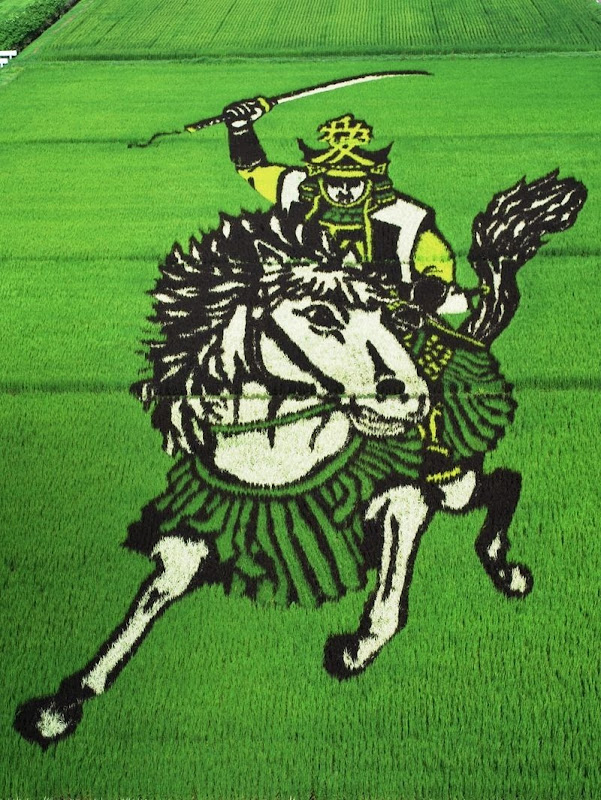 japanese-rice-paddy-art-1