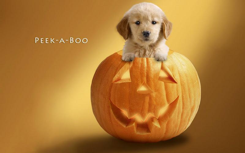 Little Helloween Dog, Halloween