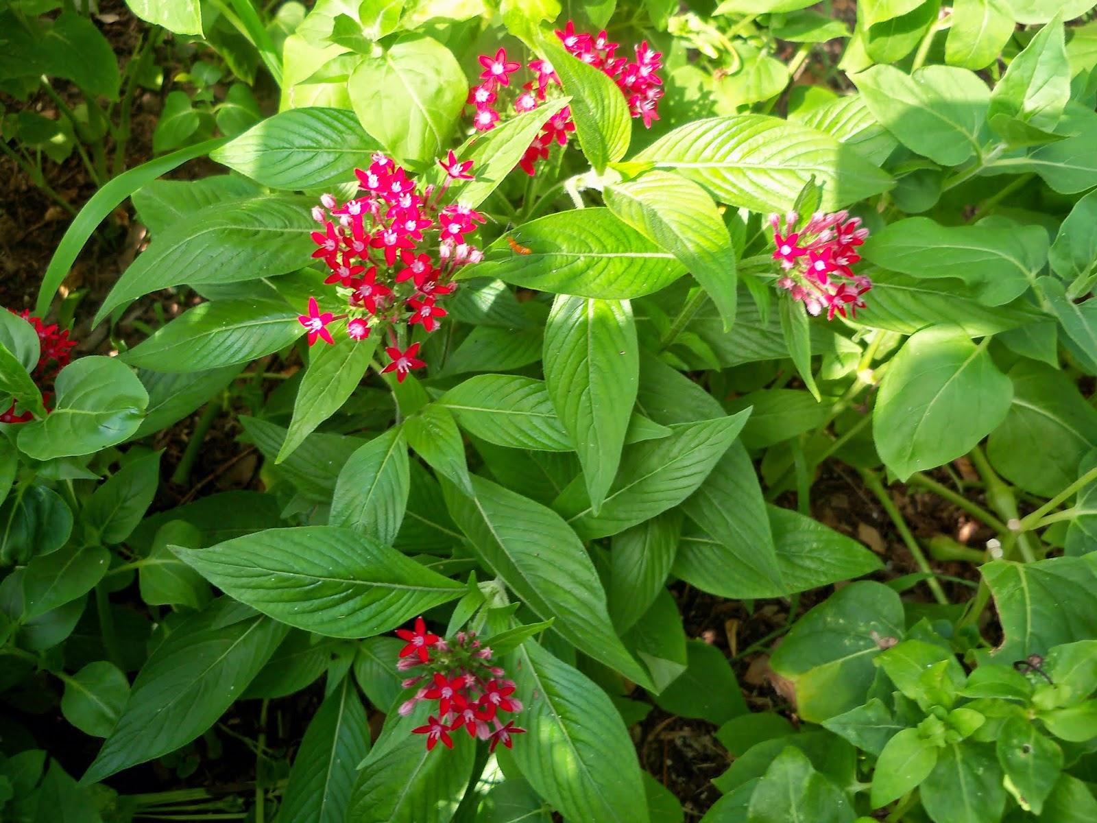Gardening 2014 - 116_3242.JPG