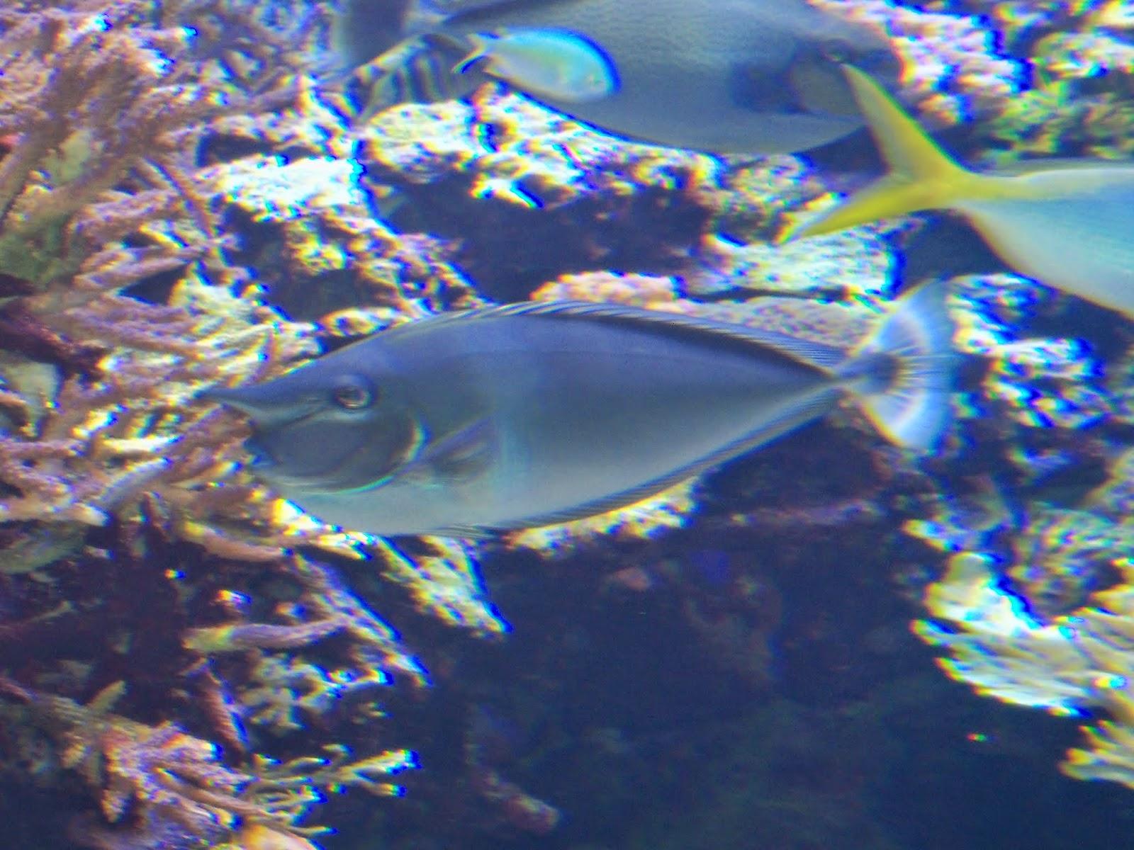 Downtown Aquarium - 116_3996.JPG