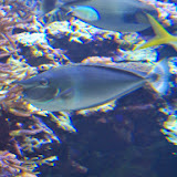 Downtown Aquarium - 116_3996.JPG