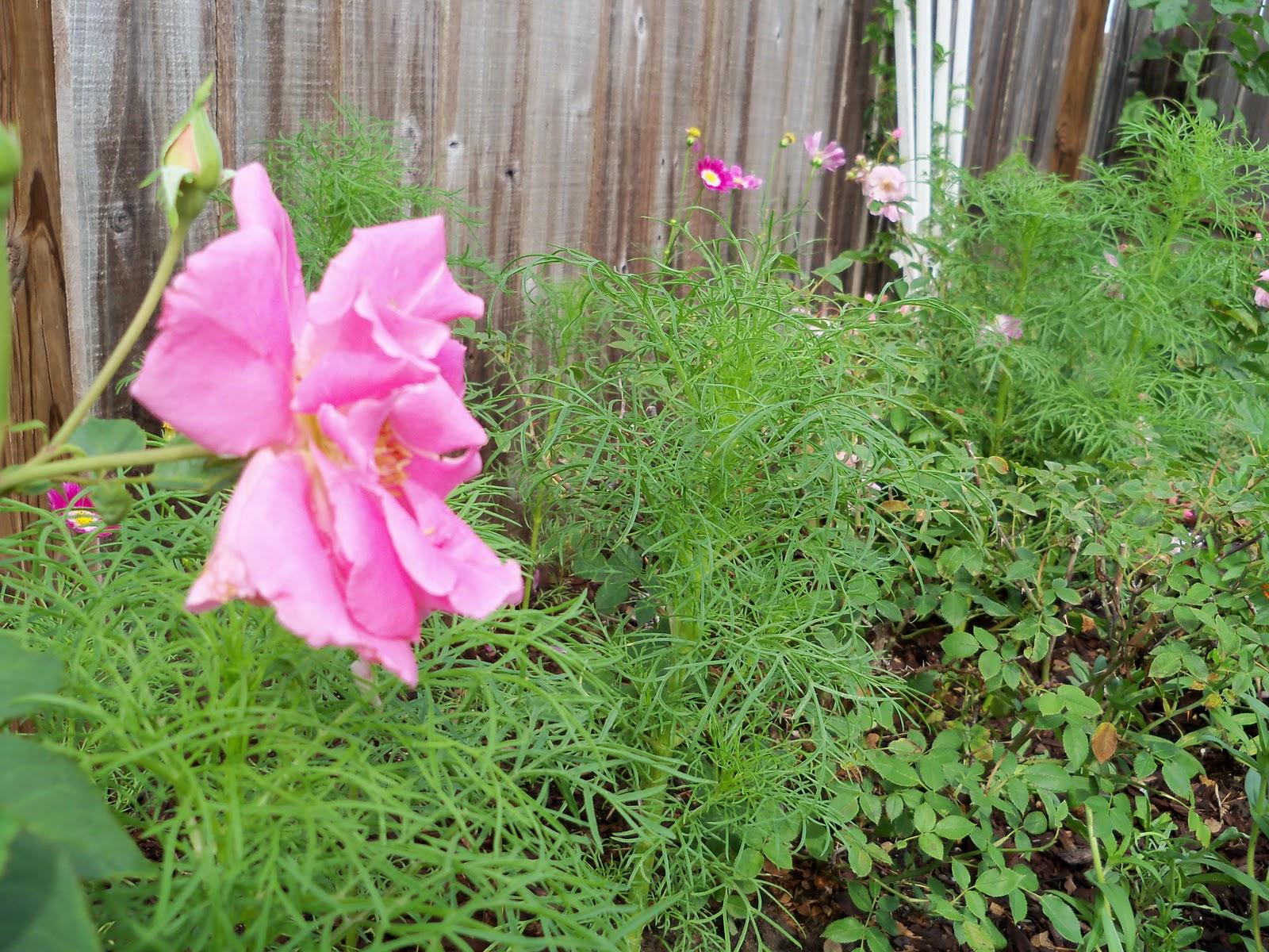 Gardening 2010, Part Two - 101_2186.JPG
