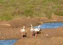 10 flamingo.jpg