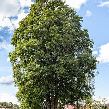 Stockholm Trädvård, Trädfällning Trädfällare 141