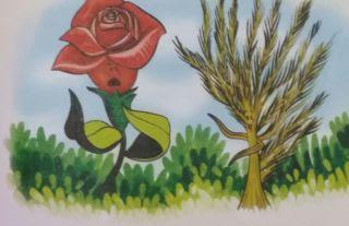 La rosa y el amaranto