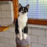 2014-6 gatti
