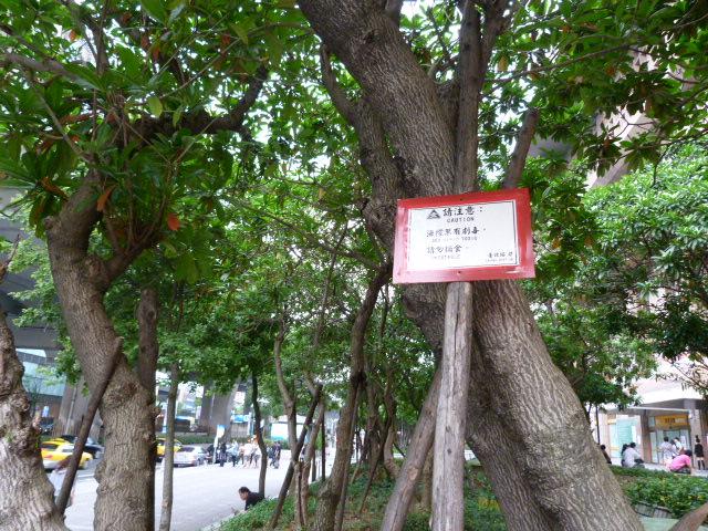 TAIWAN. Taipei ballade dans un vieux quartier - P1020638.JPG