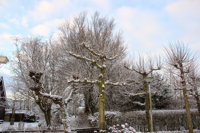 2015-02-05-Winter - IMG_3856.jpg
