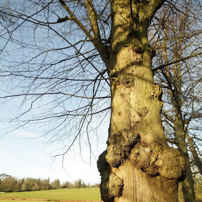 Stowe_Trees_37.JPG